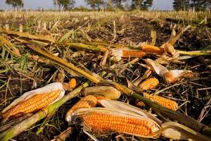 Agricultural-waste