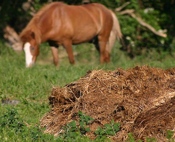 Animal-Manure-Waste