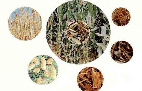 classification of biomass