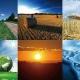 horno de biomasa