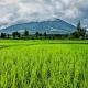 Tierras de cultivo verde